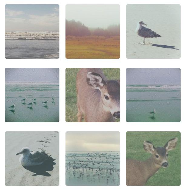 insta collage 1